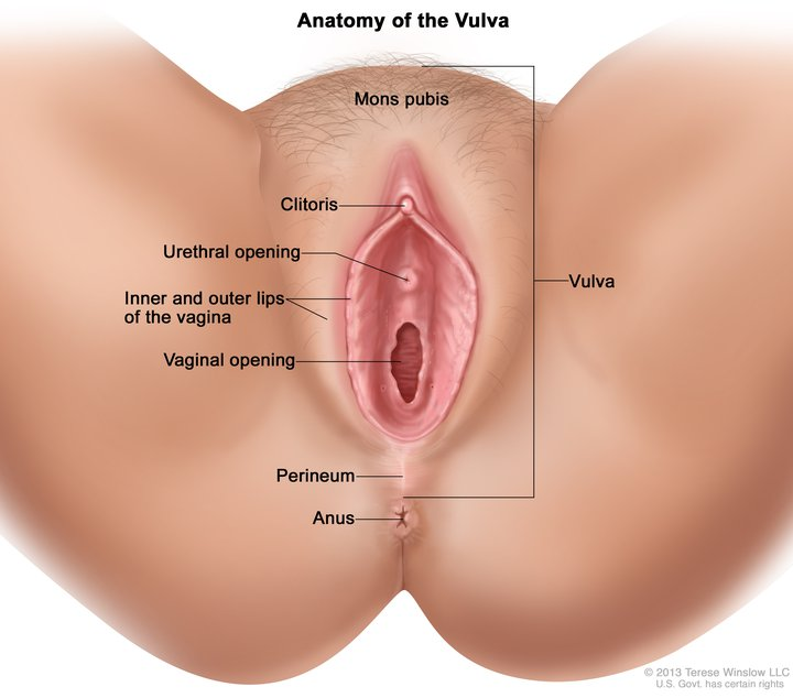 picture of vaginal, vulvar anatomy